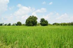 Campo e cielo di erba Fotografia Stock