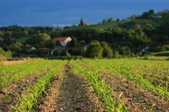 Campo e colline in autunno Fotografia Stock Libera da Diritti