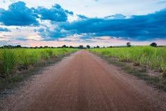 Campo e estrada da cana-de-açúcar com céu azul fotografia de stock
