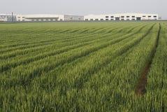 Campo e fabbrica di cereale Fotografia Stock Libera da Diritti