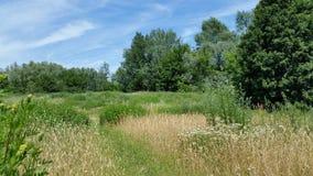 Campo e flora indesejável de brotamento fotografia de stock
