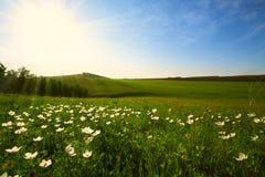 Campo e flores Fotografia de Stock Royalty Free