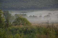 Campo e floresta na névoa/manhã/natureza do leste distante de Rússia Imagens de Stock