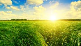 Campo e foresta di erba verde sotto il sole di tramonto. Immagini Stock