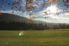 Campo e foresta nelle alpi svizzere Fotografie Stock