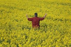 Campo e gesticular de florescência de exame da colza do fazendeiro fotografia de stock royalty free