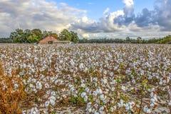 Campo e granaio del cotone fotografie stock libere da diritti