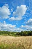 Campo e legno Fotografie Stock Libere da Diritti