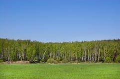 Campo e legno Fotografia Stock Libera da Diritti