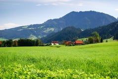 Campo e montagne di erba verde svizzero Fotografie Stock