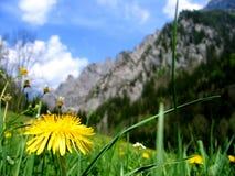 Campo e montanha Foto de Stock Royalty Free