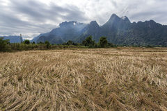 Campo e mountians do arroz Foto de Stock Royalty Free