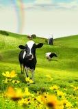 Campo e mucca Fotografia Stock