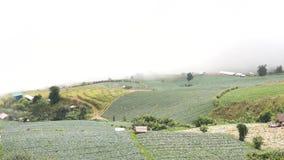 Campo e névoa da couve video estoque