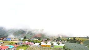 Campo e névoa da couve vídeos de arquivo