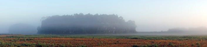Campo e névoa de exploração agrícola Imagem de Stock Royalty Free