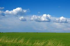 Campo e nubi di frumento verdi Immagine Stock