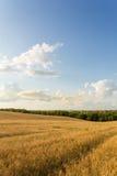 Campo e nuvens de trigo Imagem de Stock Royalty Free