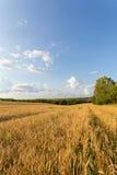 Campo e nuvens de trigo Imagens de Stock