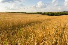 Campo e nuvens de trigo Fotos de Stock