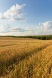 Campo e nuvens de trigo Fotografia de Stock