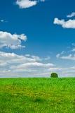 Campo e o céu Imagens de Stock