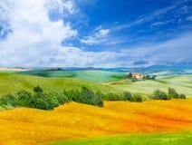 Campo e paisagem dourados de Toscânia, Itália Foto de Stock