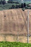 Campo e polos de trigo fotografia de stock