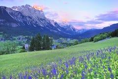 Campo e por do sol de flor na dolomite Foto de Stock Royalty Free
