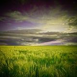 Campo e por do sol verdes Fotos de Stock Royalty Free