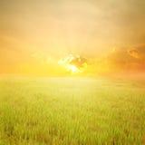 Campo e por do sol verdes do arroz imagem de stock
