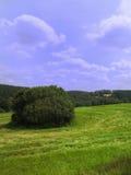 Campo e prado Fotografia de Stock Royalty Free
