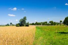 Campo e prado da aveia Fotografia de Stock