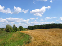 Campo e prato di granulo raccolti immagine stock libera da diritti