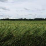 campo e prato in Meclemburgo-Pomerania Fotografia Stock Libera da Diritti