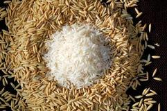 Campo e riso di tavola immagine stock