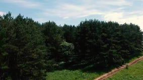 Campo e sentiero forestale stock footage