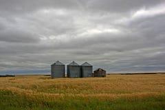 Campo e silo di frumento immagine stock libera da diritti