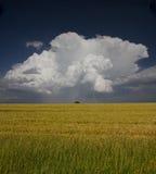 Campo e tempestade Fotos de Stock Royalty Free