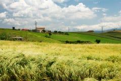 Campo e terreno coltivabile di frumento Immagini Stock Libere da Diritti