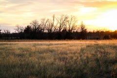 Campo e tramonto del prato Immagine Stock