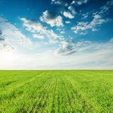 campo e tramonto di agricoltura dell'erba verde in cielo blu Immagine Stock Libera da Diritti