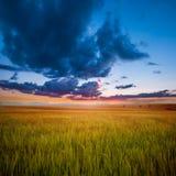Campo e tramonto verdi Fotografie Stock