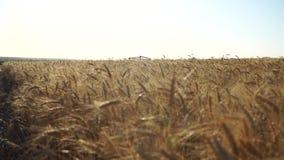 Campo e voo de trigo vídeos de arquivo