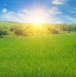 campo ed alba nel cielo blu Immagine Stock