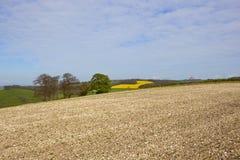 Campo ed alberi gessosi del fagiolo Immagine Stock Libera da Diritti
