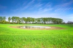 Campo ed alberi verdi Immagini Stock Libere da Diritti