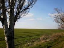 Campo ed albero Fotografia Stock