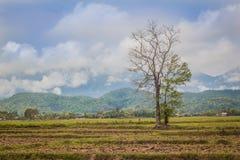Campo ed albero verdi Fotografia Stock Libera da Diritti