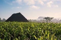Campo ed essiccatore di tabacco nella valle Cuba di Vinales Fotografia Stock